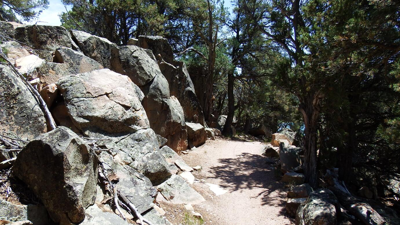 Cookie_Tree_Trail5